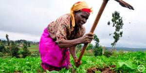Palmarin: allier adaptation et transformation des savoir-faire traditionnels
