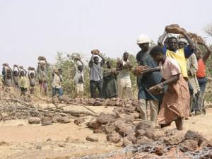 La participation: recette contre la désertification – exemple nigérien