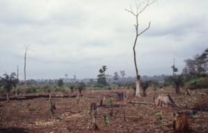 Déforestation en Côte d'Ivoire: quand les jeunes agricultrices prennent la main