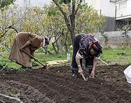 Femmes travaillant la terre - village d'Aït Mekedem - Le 20 novembre 2007 - Photo : Christophe TAAMOURTE