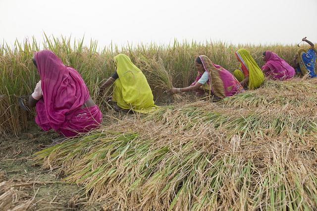 """""""Inégalités de genre dans l'agriculture"""", village de Mahadeva, Inde / Photo © Bill & Melinda Gates Foundation / Flickr (c.c)"""